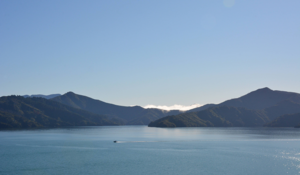 Photo of Queen Charlotte Sound / Tōtaranui